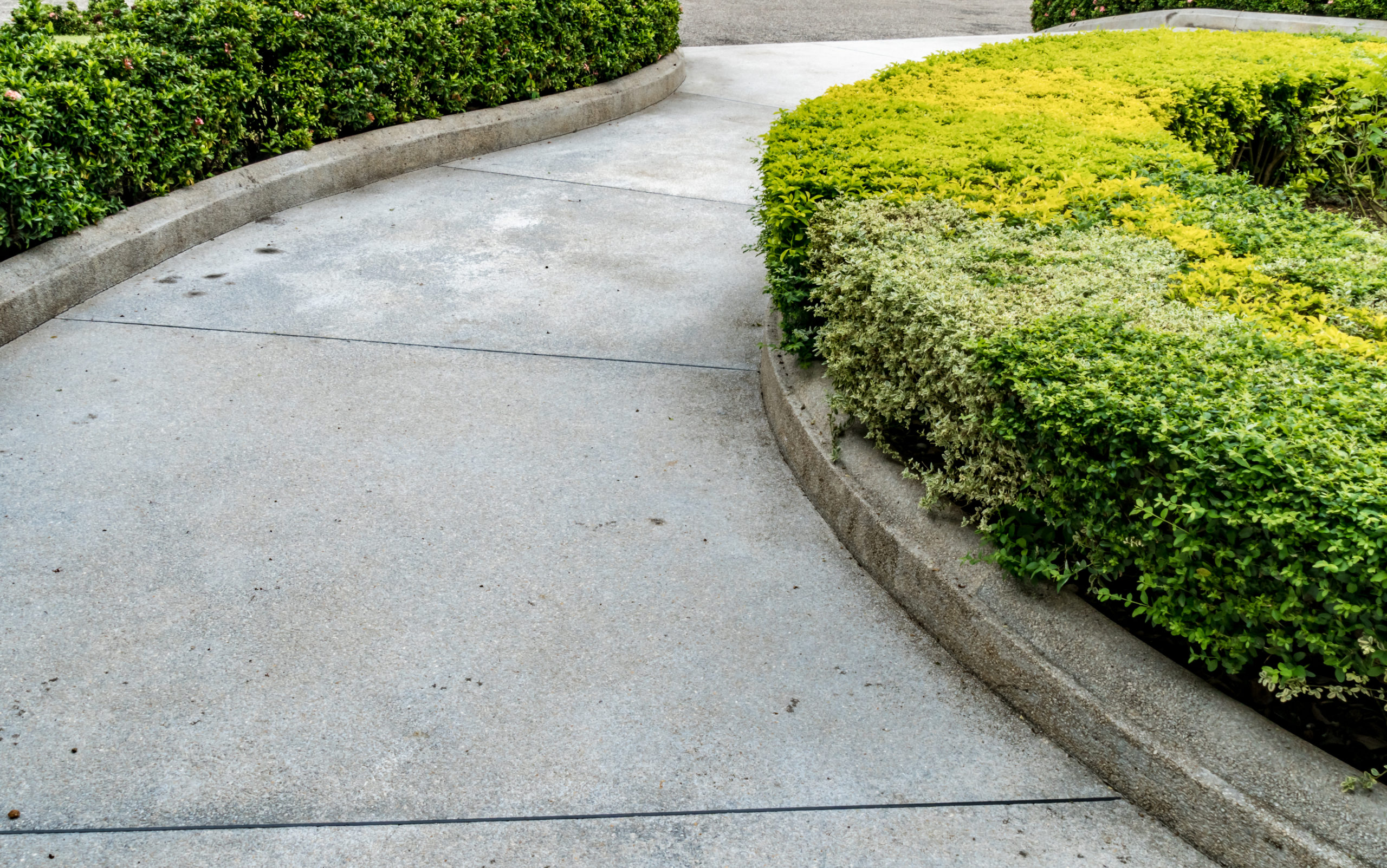 This is an image of a concrete walkway in between bushes.